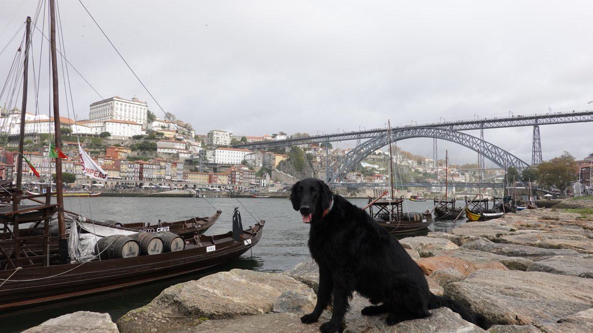 Populair in Porto