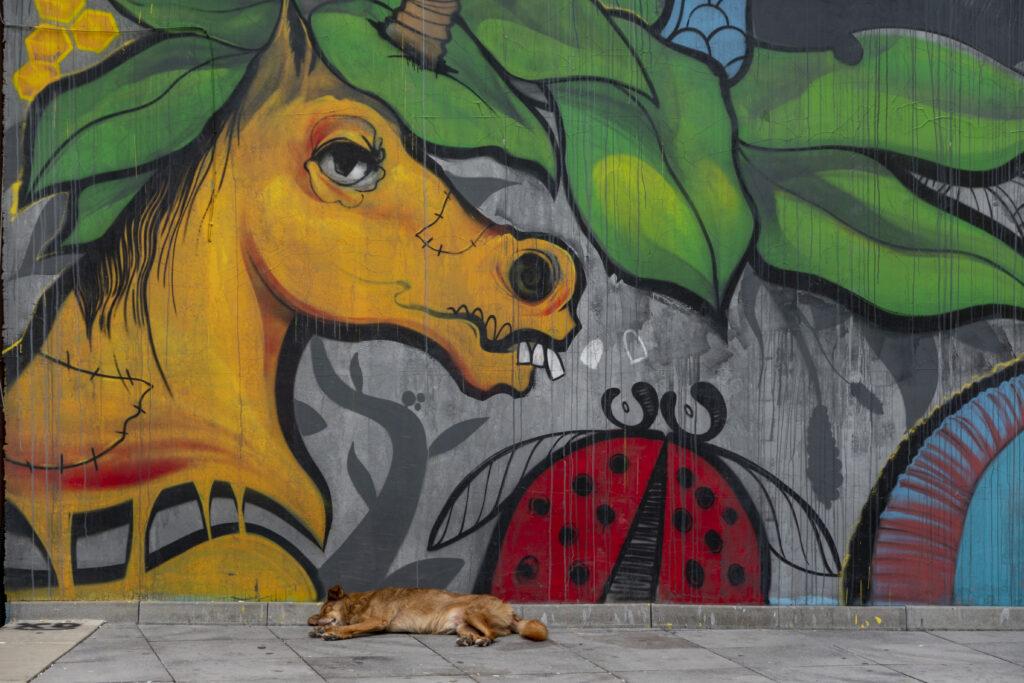 Plovdiv street art tour